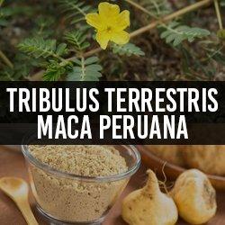 Tribulus Terrestris e Maca Peruana